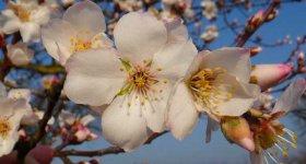 Frühlingsgefühle 6 Nächte