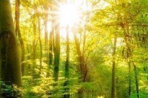 Jesienny Relaks - Spotkanie z promieniami  słońca