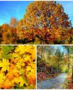 Jesień z Czardaszem