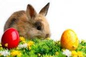 Wielkanoc Pakiet Rodzinny