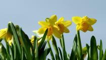 Wiosna w Górach (5 dni)
