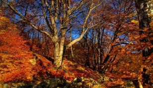 Jesień w Górach (5 dni)