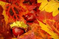 Jesienny weekend