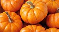 Długi Weekend o smaku DYNI 7-11 listopada