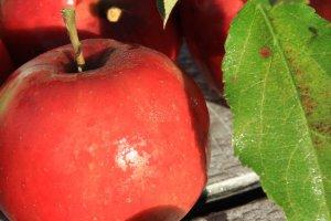 Jabłkowy weekend