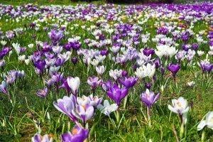 Wiosenne przebudzenie - SPA w cenie!