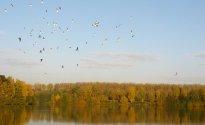 Herbstzeit– Wildgerichte / Sauerland